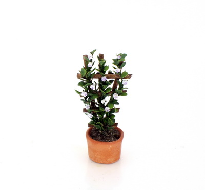 Purple Potted Jasmine
