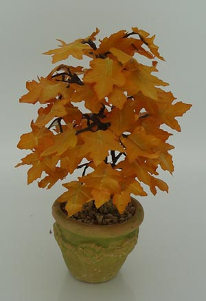 Autumnal Maple