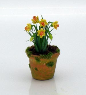 Daffodils in Mossy Pot